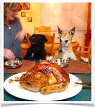Monty-Summer Thanksgiving