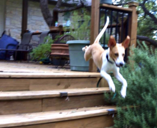 MAX JUMPING OFF DECK